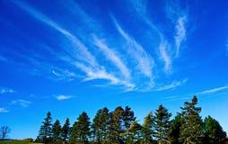 ciel bleu avec des nuages et des arbres Photos libres de droits