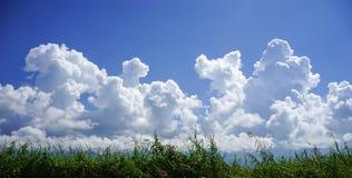 Ciel bleu avec des nuages avec l'herbe verte Images libres de droits