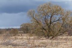 Ciel bleu avec des nuages neigeux et un arbre énorme Photo libre de droits
