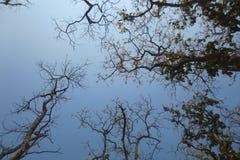 Ciel bleu avec l'arbre Photos libres de droits
