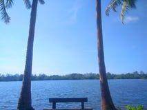 Ciel bleu avec l'arbre de noix de coco photographie stock