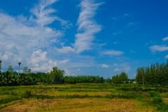 Ciel bleu avec l'espace vert Photographie stock