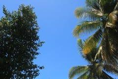 Ciel bleu avec la feuille de noix de coco dans le premier plan Images libres de droits