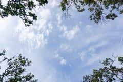 Ciel bleu avec le dessus d'arbre Image libre de droits