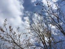 Ciel bleu, branches d'arbre Photo stock