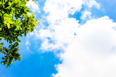 Ciel bleu clair comme fond, papier peint de nuage de ciel, jour de soleil, papier peint en pastel de ciel Photo libre de droits