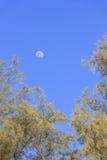 Ciel bleu clair qui a la demi-lune et le dessus du pin comme cadre photographie stock libre de droits