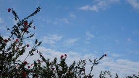 ciel bleu d'arbre et nuages blancs Image libre de droits