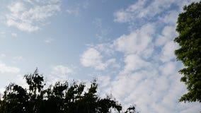 ciel bleu d'arbre et nuages blancs Photos libres de droits