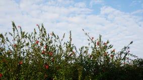 ciel bleu d'arbre et nuages blancs Images libres de droits