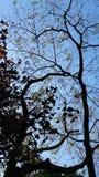 ciel bleu d'arbre et nuages blancs Image stock