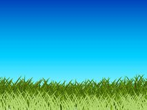ciel bleu d'herbe Photo libre de droits