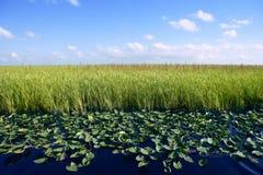 Ciel bleu dans des zones humides de marais de la Floride Image stock