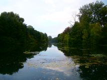 Ciel bleu dans la forêt entre les branches Images libres de droits