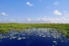 Ciel bleu dans le plan vert de zones humides de marais de la Floride Image libre de droits
