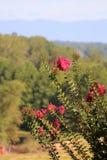 Ciel bleu de fleur rose Photo libre de droits