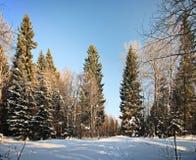 Ciel bleu de forêt d'hiver Photographie stock libre de droits