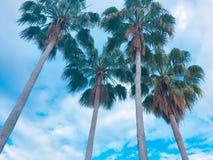 Ciel bleu de la Floride avec des paumes de rêveurs photographie stock