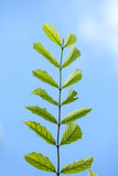 Ciel bleu de lame verte Photo libre de droits