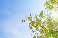 ciel bleu de nuage de plan rapproché Photographie stock libre de droits
