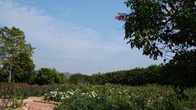 Ciel bleu de Rose et nuages blancs Photo libre de droits
