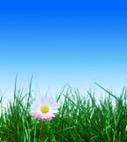 ciel bleu de vert d'herbe de fleur Images libres de droits