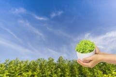 ciel bleu de vert d'herbe de fond Photo libre de droits