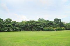 ciel bleu de vert d'herbe de fond Photo stock