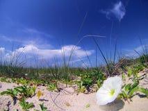 Ciel bleu derrière l'herbe, la fleur et le sable de mer photo libre de droits