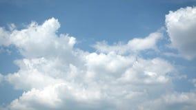 Ciel bleu en été avec de beaux cumulus Rapidement timelapse banque de vidéos
