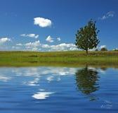 Ciel bleu et arbre dans le domaine Photo libre de droits