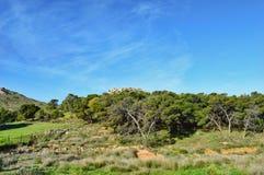 Ciel bleu et arbres Image libre de droits