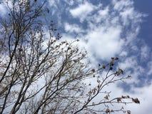 Ciel bleu et branches d'arbre Image libre de droits