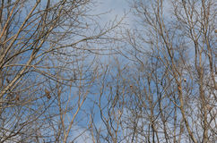Ciel bleu et branches nues Photographie stock libre de droits