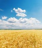 ciel bleu et champ d'or d'agriculture Images stock