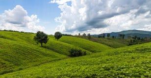 Ciel bleu et classique de XP de collines vertes Photos stock