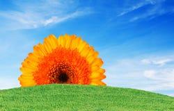 Ciel bleu et fleur d'herbe verte image libre de droits