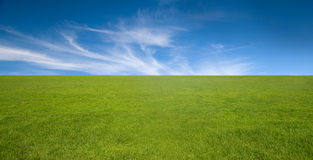Ciel bleu et herbe verte Photo stock
