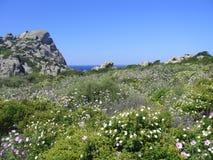 Ciel bleu et mer étonnante, roches de granit avec la végétation méditerranéenne, vallée de lune, della Luna, Testa de capo, Santa Photo libre de droits