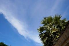 Ciel bleu et nuages avec la paume ou les noix de bétel d'écrou d'arec Photos stock