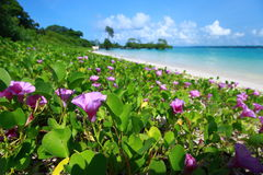 Ciel bleu et nuages en île de Havelock. Îles d'Andaman, Inde Image stock