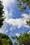 Ciel bleu et nuages et feuillage. Photo libre de droits
