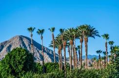 Ciel bleu et palmiers Photo libre de droits