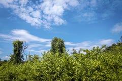 Ciel bleu et paysage de forêt photographie stock