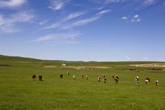 Ciel bleu et prairie Photos libres de droits