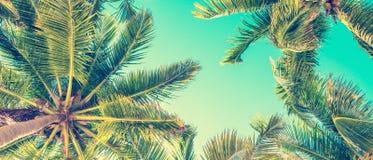 Ciel bleu et vue de palmiers de dessous, style de vintage, fond panoramique d'été photographie stock