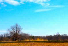 Ciel bleu intense au-dessus de chemin d'or de terre et de saleté le jour d'hiver image stock