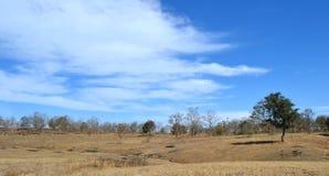 Ciel bleu, nuages et forêt Photographie stock
