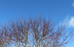 Ciel bleu par les branches d'hiver Photographie stock