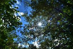 Ciel bleu par les feuilles Image stock